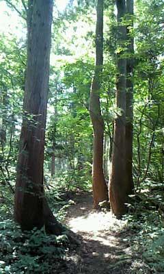 スタカ湖コース02